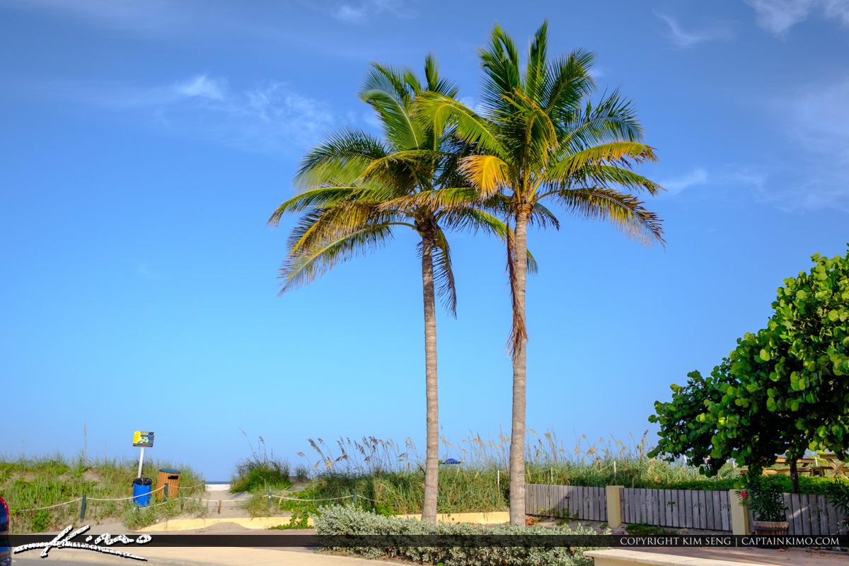 Two Coconut Tree at Beach Jetty Park Fort Pierce Florida