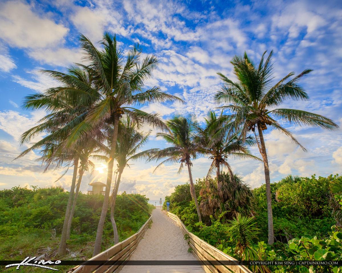 Singer Island Sunrise Ocean Reef Park Coconut Tree