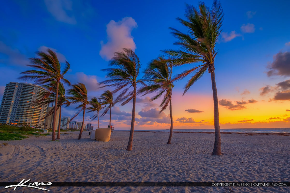 Coconut Trees at Singer Island with Condos During Sunrise