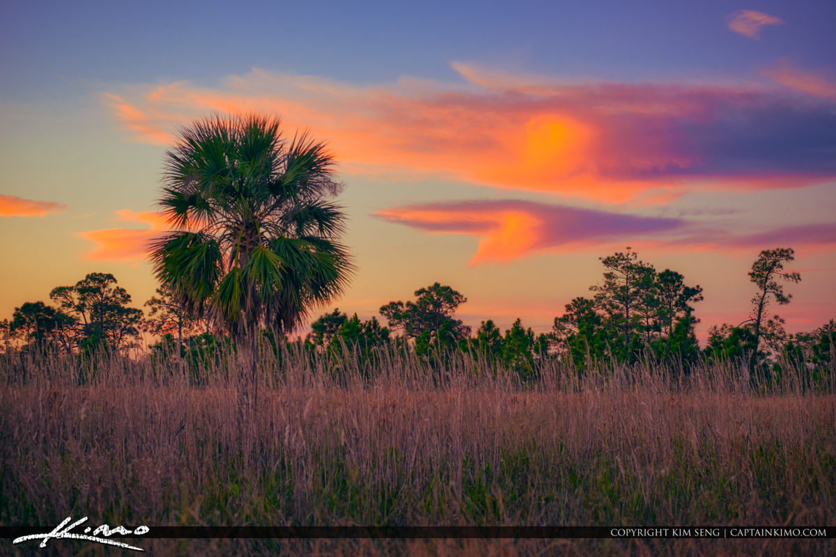 Cabbage Palm Pine Glades Natural Area