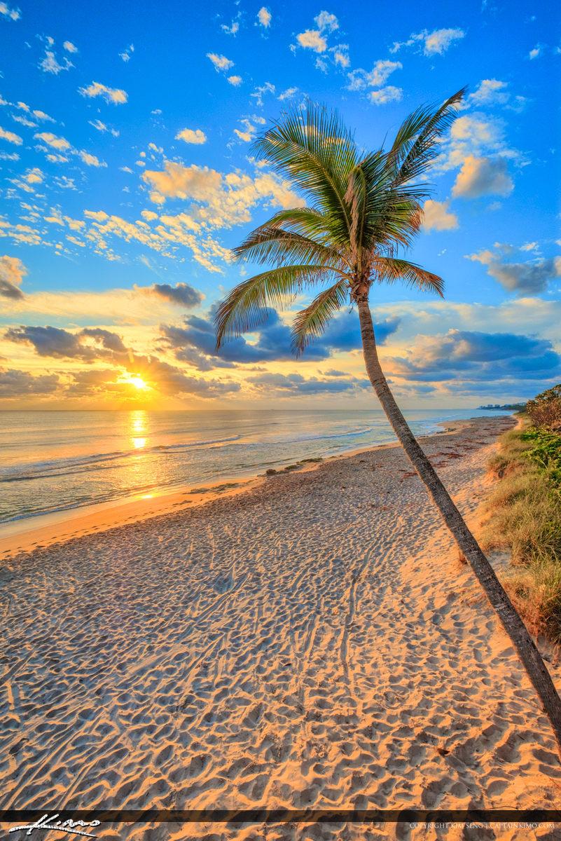Jupiter Beach Resort Sunrise Coconut Tree at Beach
