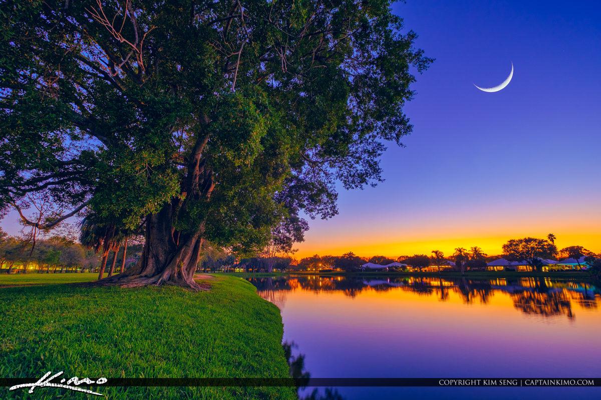 Lake Catherine Ficus Tree Christmas Moon Light