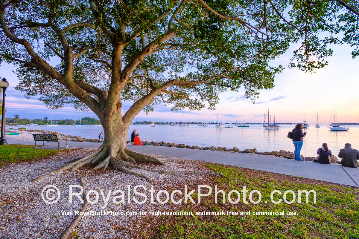 Sarasota Bayfront Large Tree with People Watching Sunset