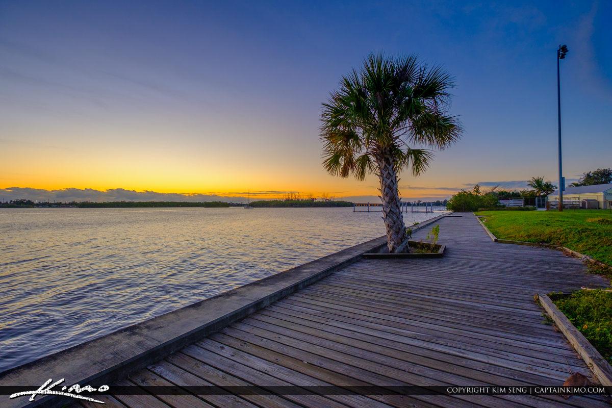 Palm Tree Leighton Park Palm City Florida Martin County