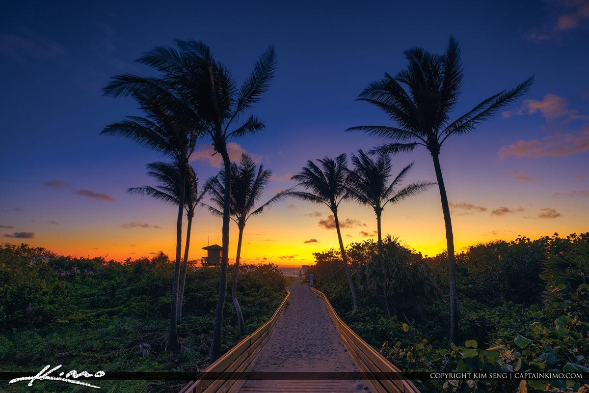 Singer Island Ocean Reef Park Coconut Tree Morning Glow