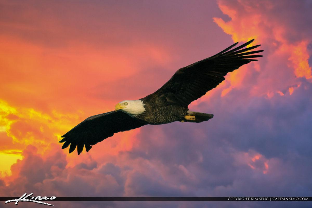 Eagle Pair Palm City BIF Background 2018-01-28