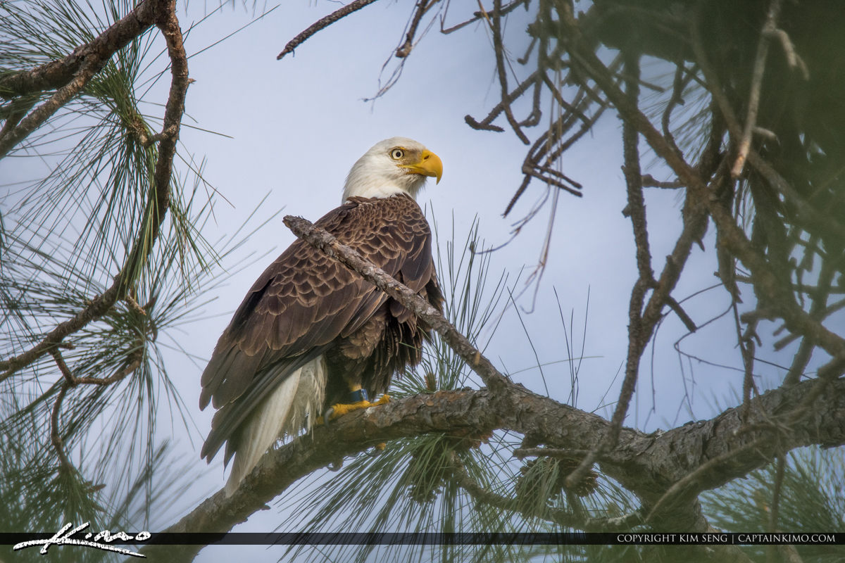 Eagle Palm City Florida I-95