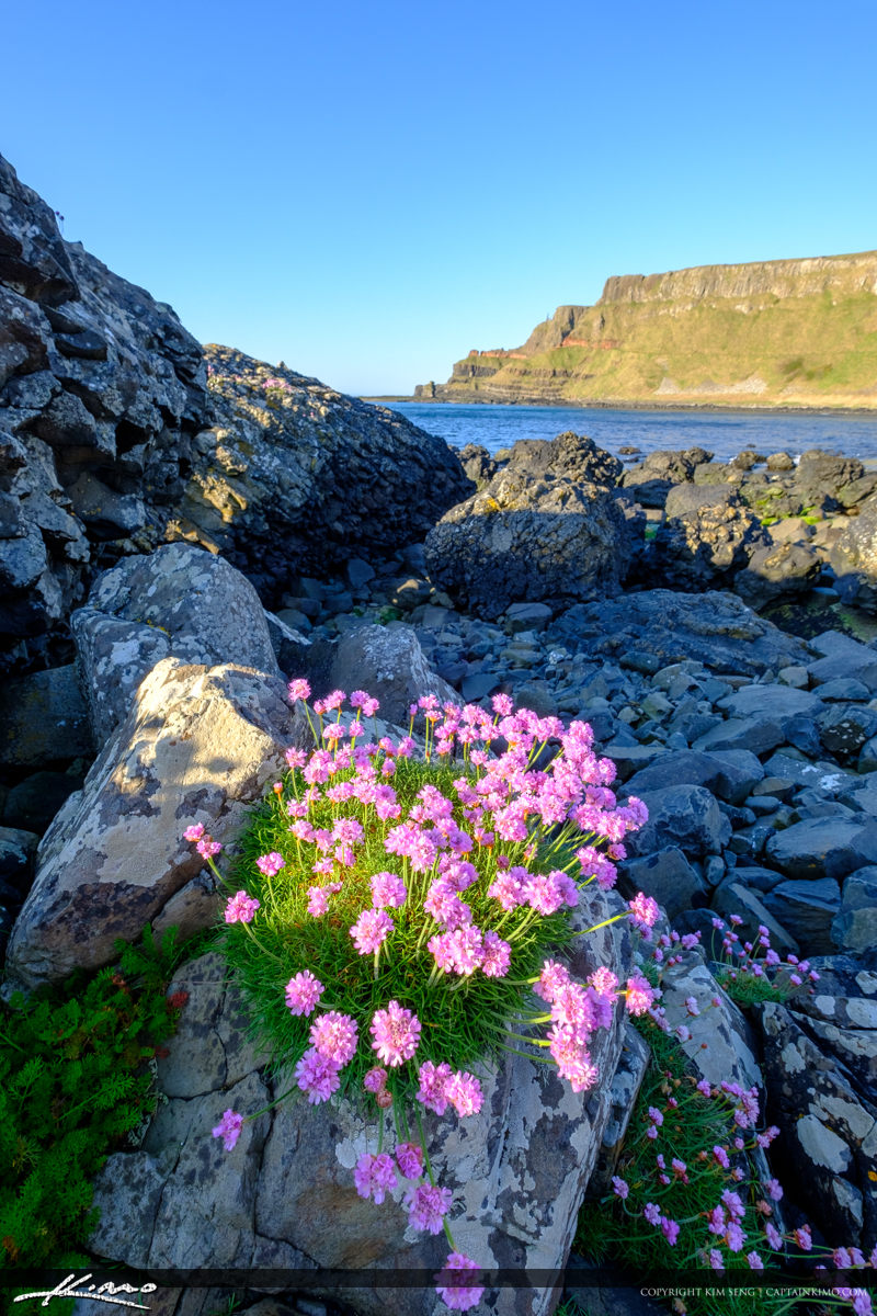 Vertical View Flowers Giants Causeway Bushmills Northern Ireland