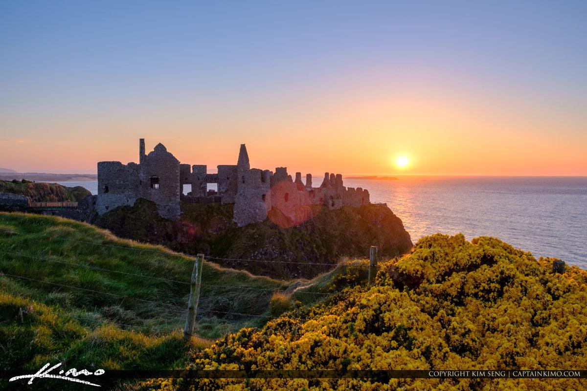 Dunluce Castle Northern Ireland Yellow Flower Fence