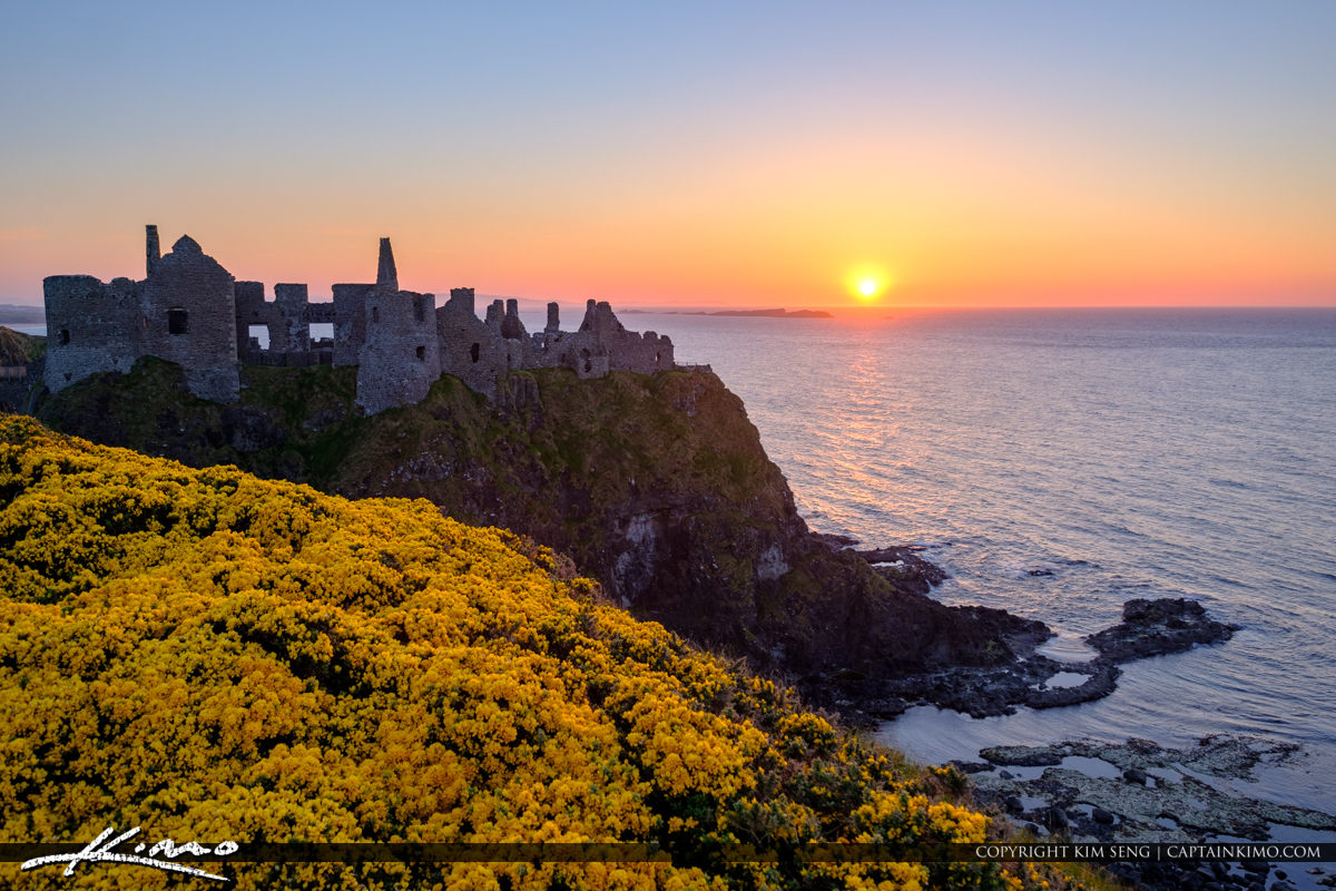 Dunluce Castle Northern Ireland Yellow Flowers at the Castle