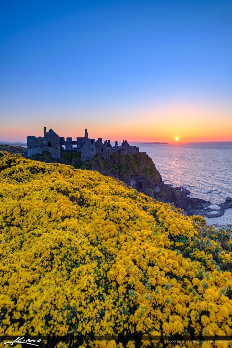 Dunluce Castle Northern Ireland VErtical View Yellow Flowers
