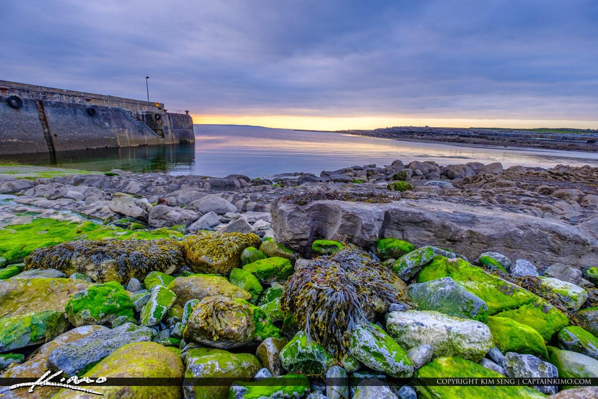 Island Ferry Doolin Ireland Algea and Seaweed