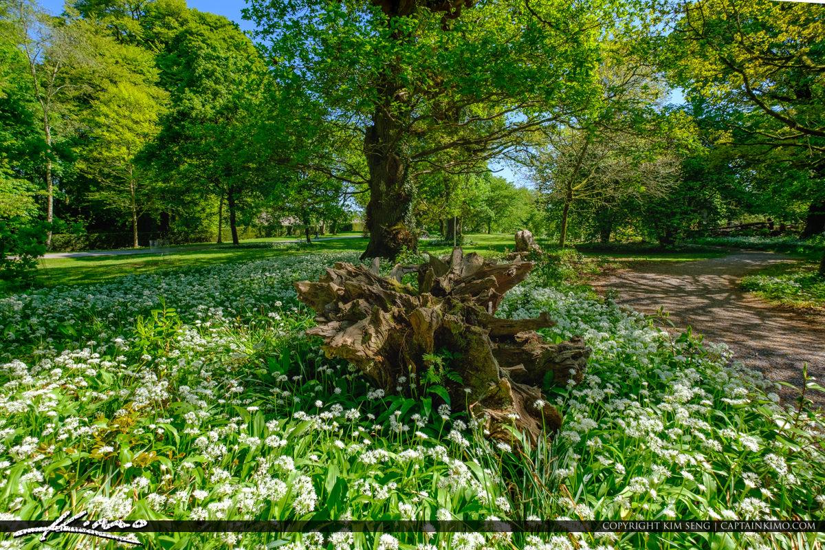 Blarney Stone Cork Ireland White Flowers at Old Tree Stump