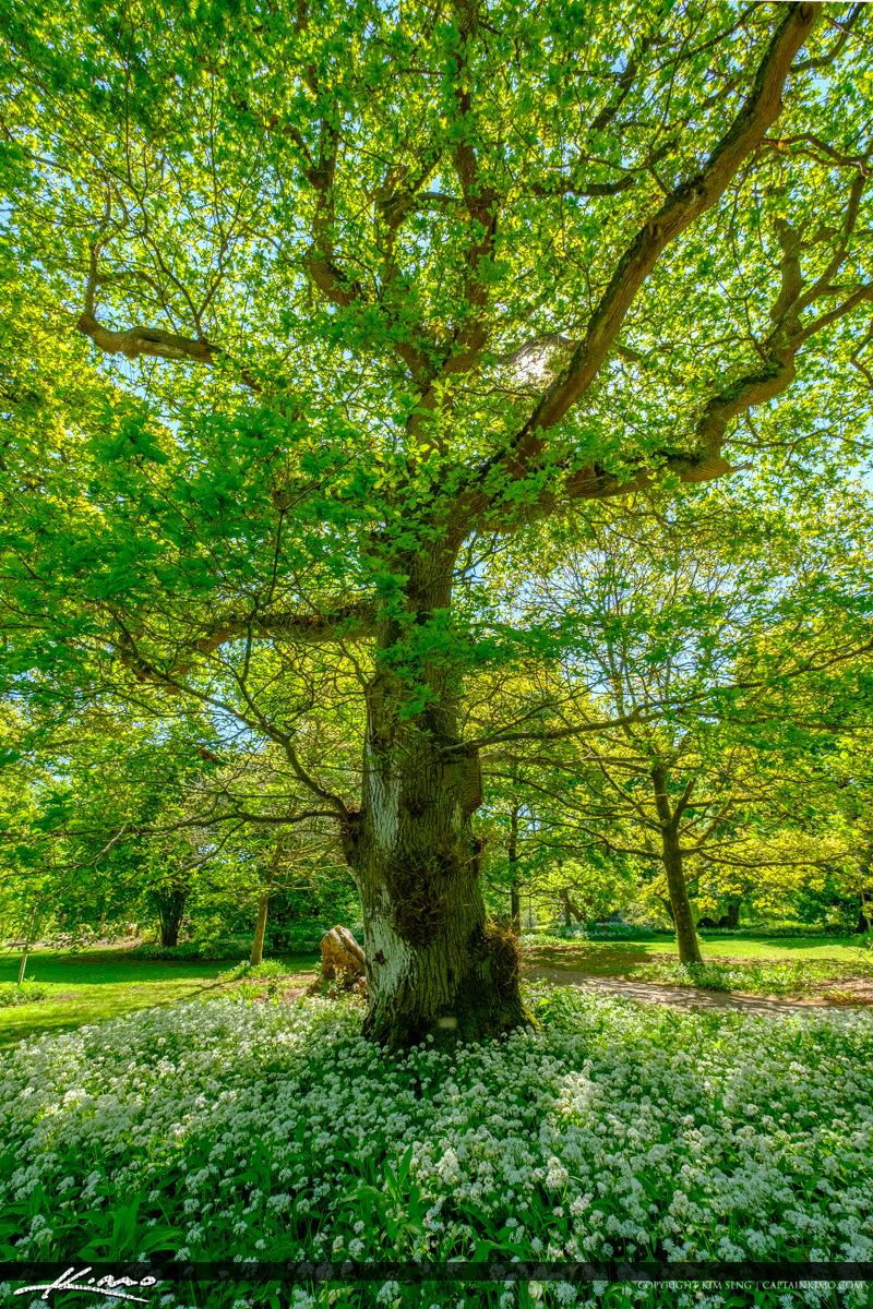 Blarney Stone Cork Ireland White Flowers at Lower Tree