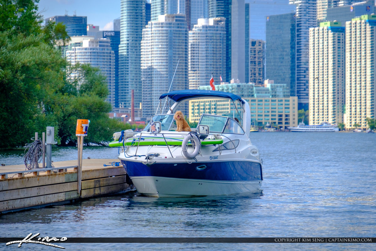 Dog on Boat Lake Ontario Centre Island Toronto Ontario Canada