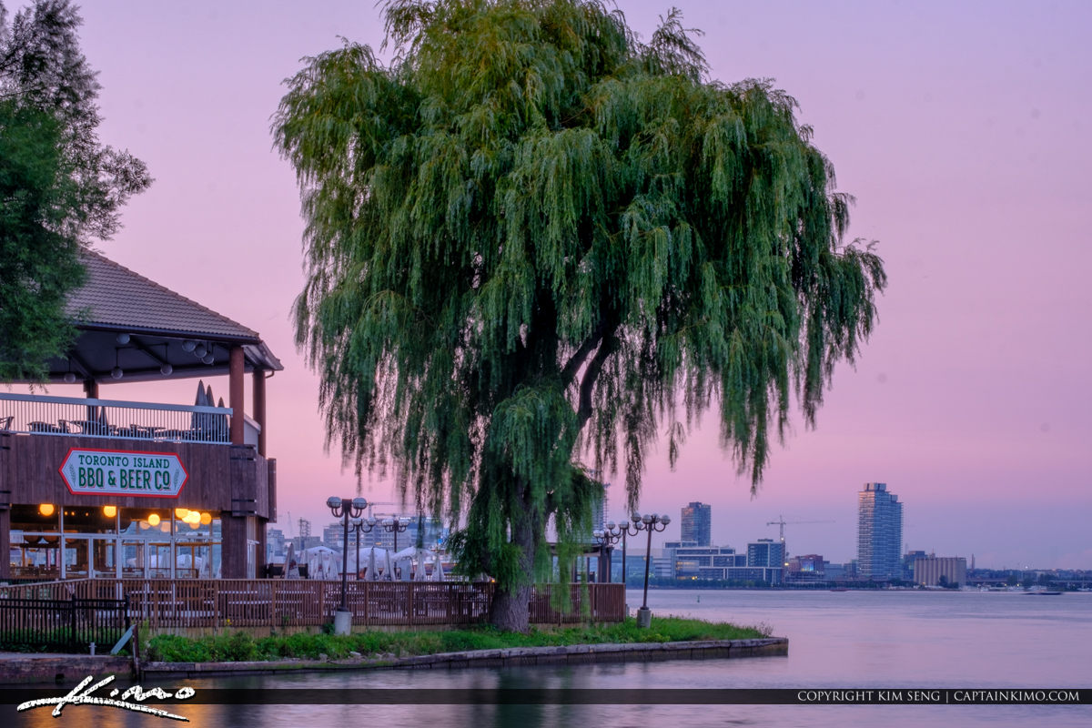 Close up Willow Tree Skyline View from Centre Island Sunset