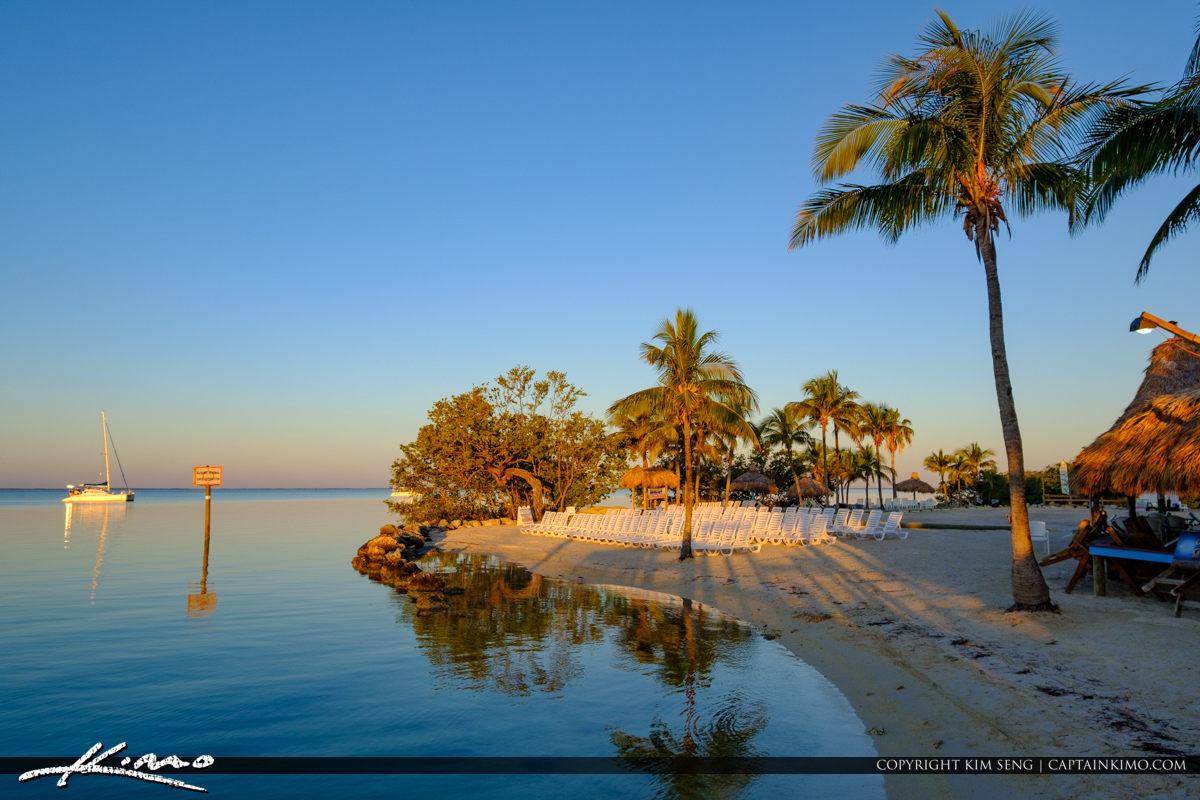 Beach Coconut Tree Gilberts Resort Key Largo Florida Keys