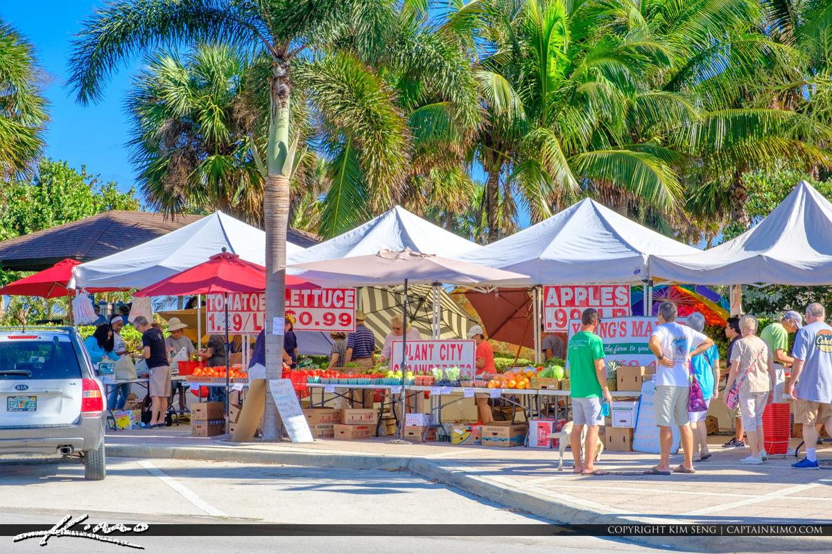 Green Market Vero Beach Florida Coconut Tree