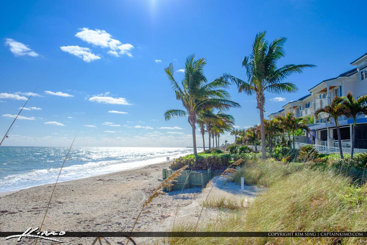 Vero Beach Florida Coconut Tree at Beach