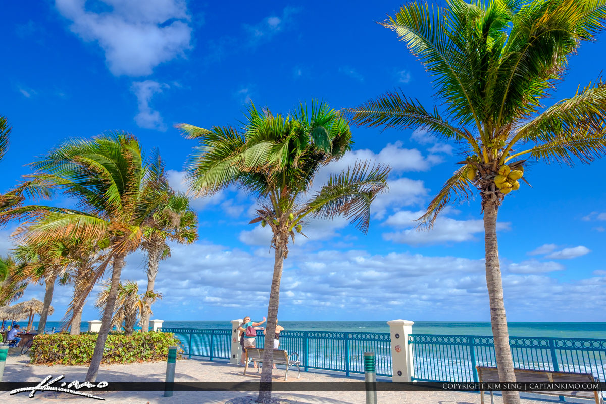 Sexton Plaza Beach Vero Beach Florida Coconut Trees