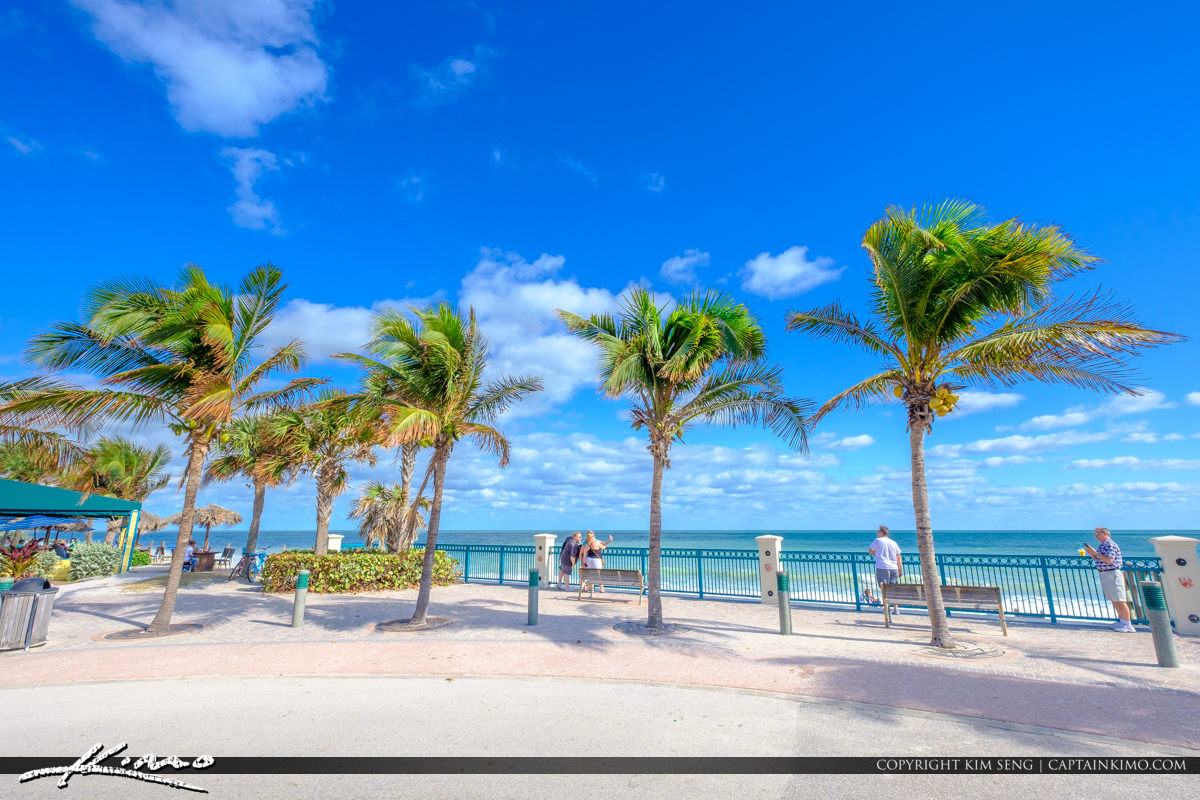 Sexton Plaza Beach Vero Beach Florida Coconut Tree at Road