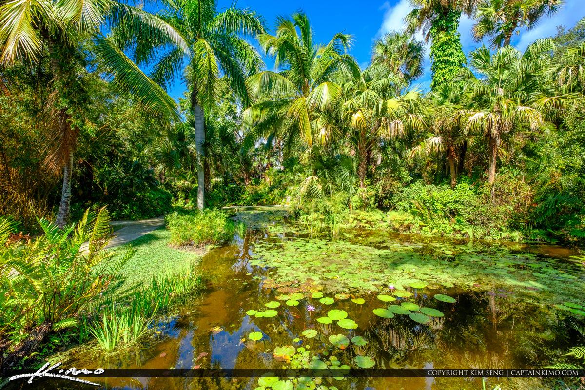 Lilypad at Pond McKee Botanical Garden Vero Beach Florida