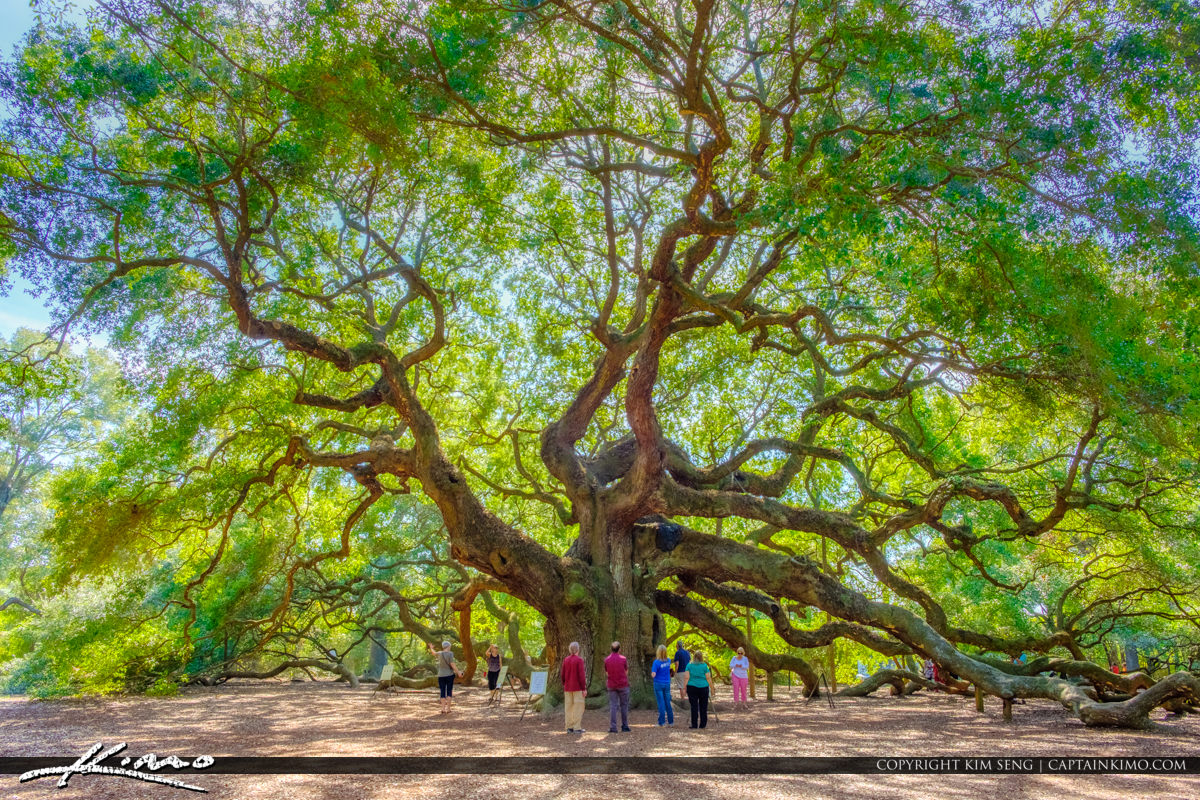 South Carolina Angel Oak Tree People at Trunck