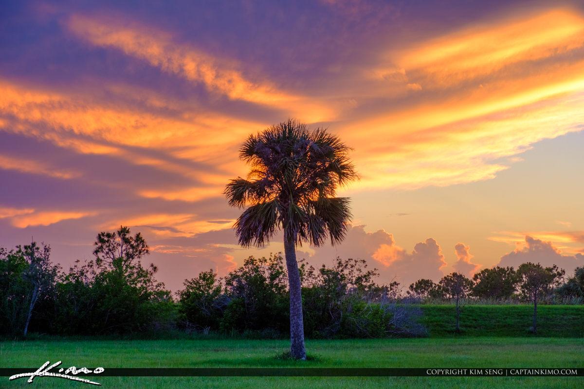 Viera Wetlands Melbourne Florida Bevard County Sunset Palm Tree
