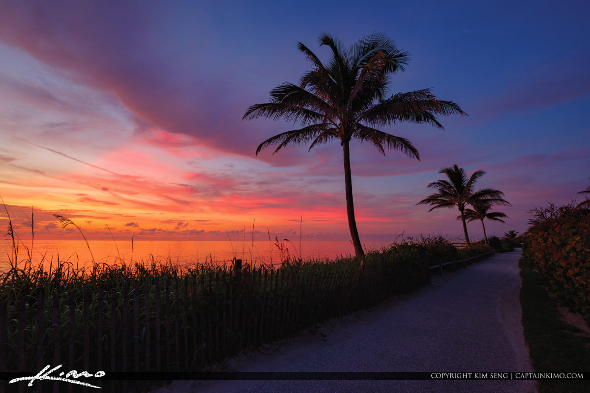 Colorful Coconut Tree Sunrise Coral Cove Tequesta Florida