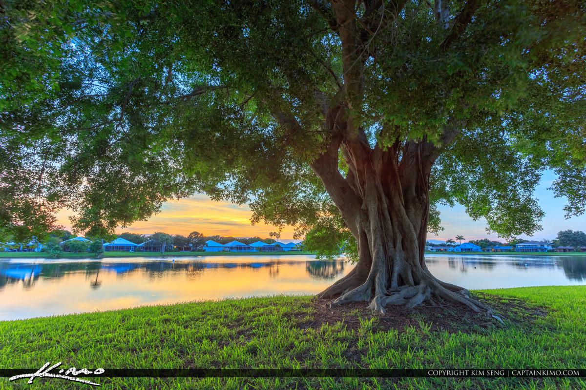 Ficus Tree Lake Catherine Park