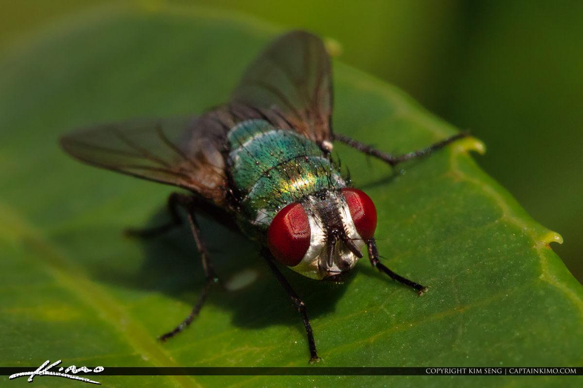 Fly in Leaf Macro