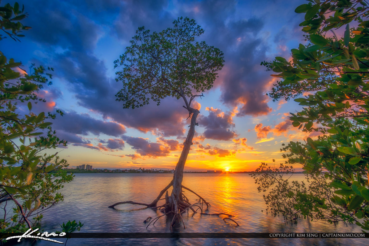 Lake Worth Lagoon MAngrove Tree Singer Island Florida Sunset