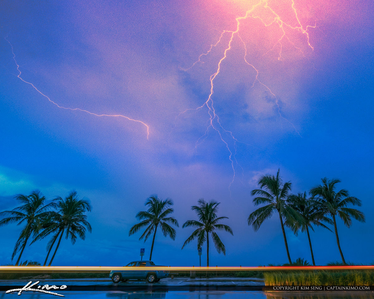 Juno Beach Lightning Coconut Trees on Beach Rd