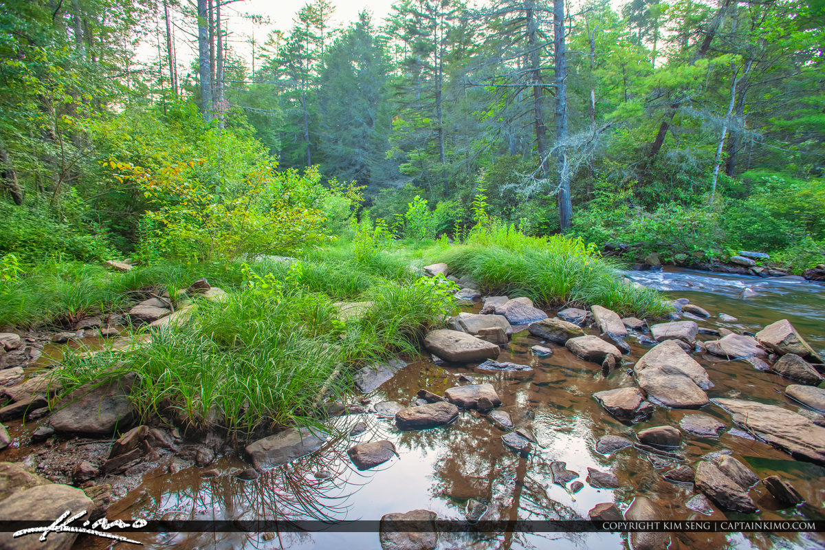 Dupont State Forest North Carolina Stream River Creek at Little