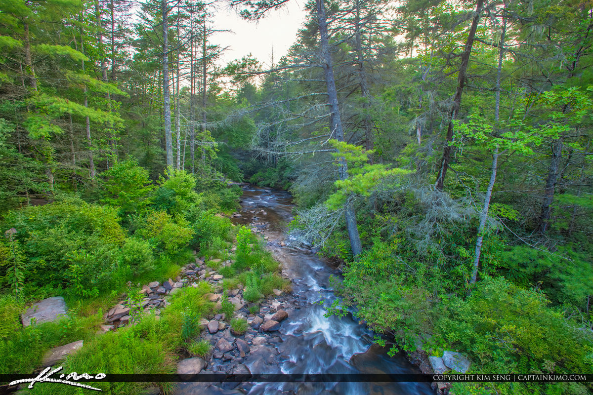Dupont State Forest North Carolina Bridge Above River Pine Trees