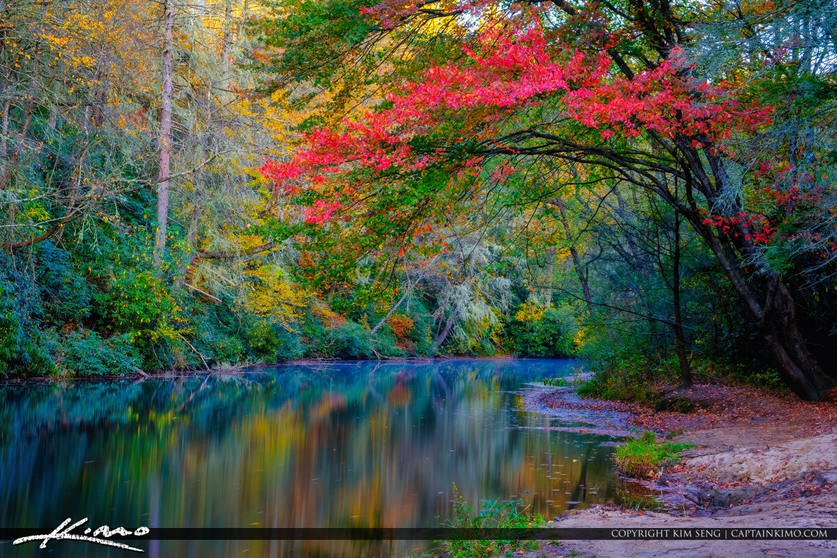 Little River Brevard Dupont State Forest North Carolina Tree Col