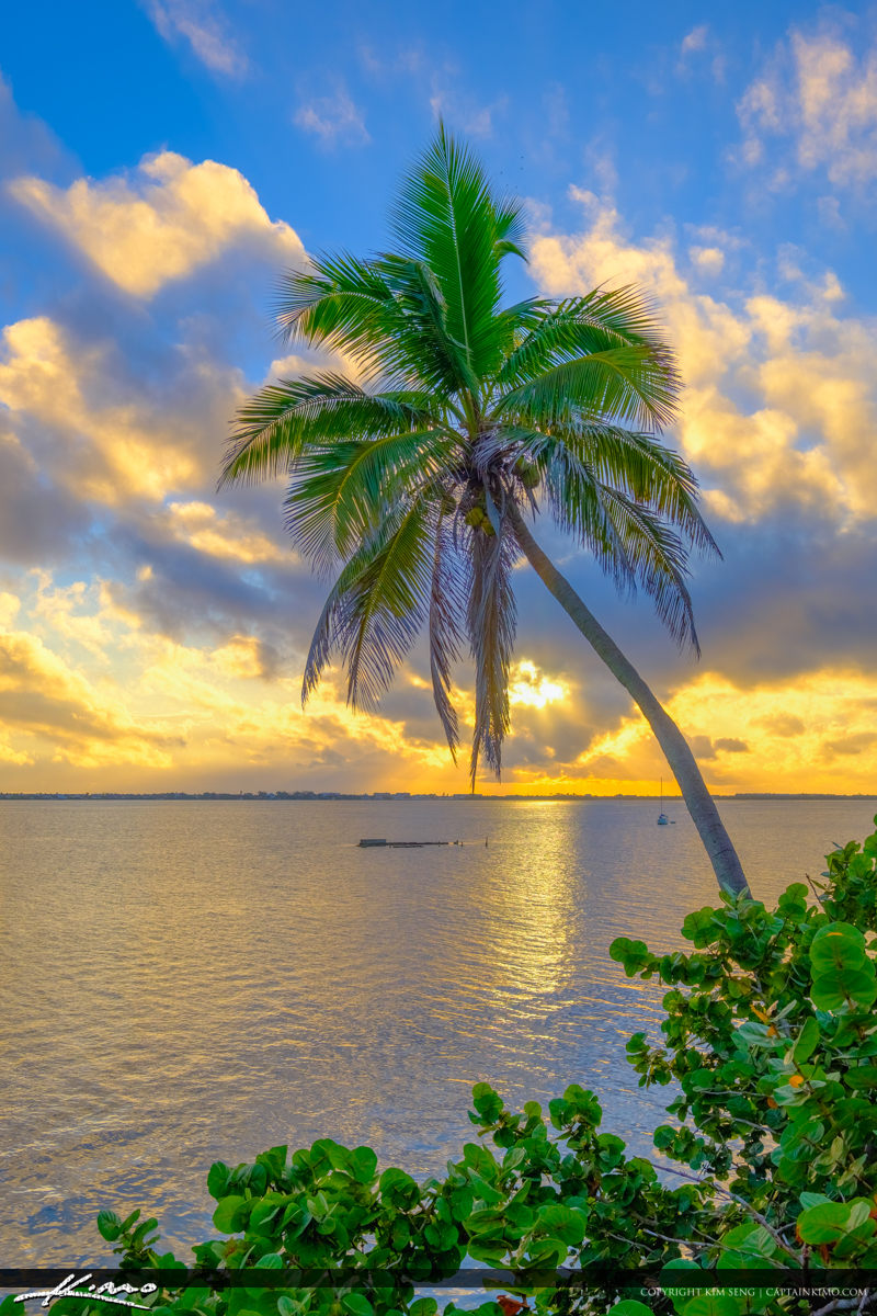 Coconut Palm Tree Over Indian River Jensen Beach Florida Sunrise