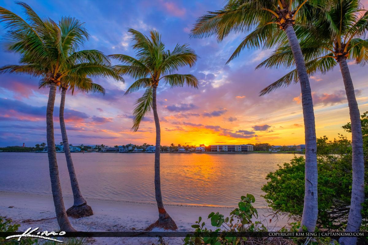 Sunset Waterwat Jupiter Island Coconut Tree