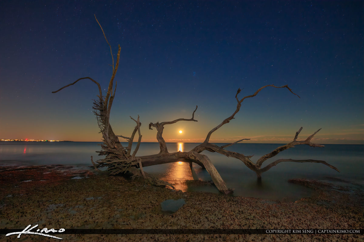Beautiful Moonrise at Jekyll Island Driftwood Beach