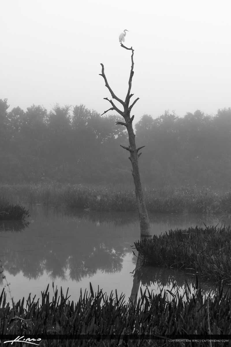 Black and White Green Cay Wetlands Dead Tree and Egret