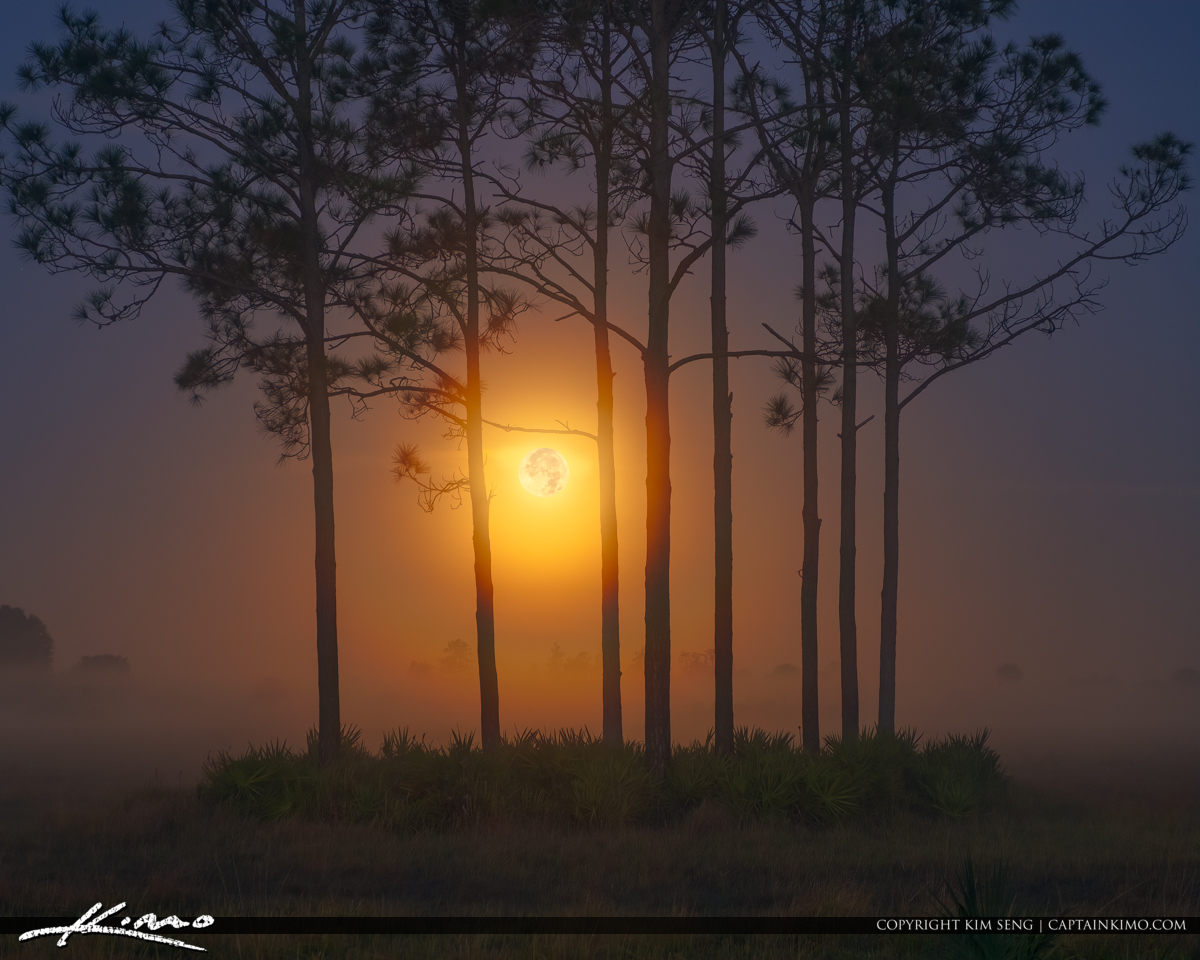Foggy Morning Moon Setting Over Florida Landscape Pine Forest Yeehaw