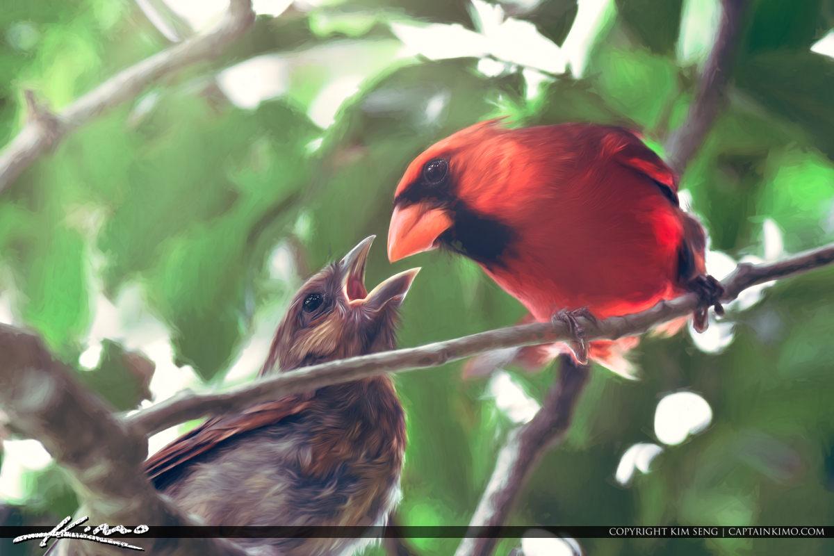 Red Cardinal Feeding Baby Cardinal