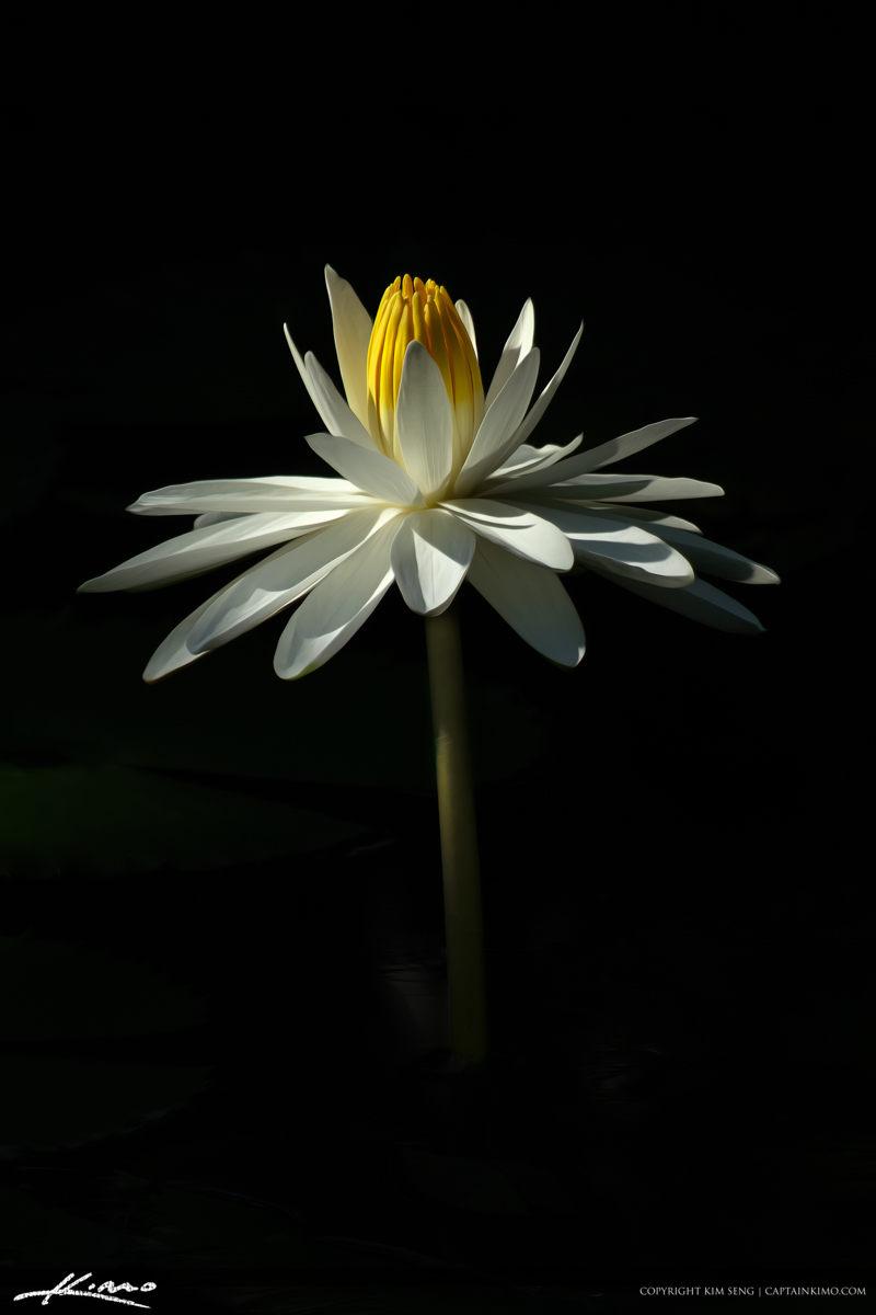 Loyus Flower Art on Black