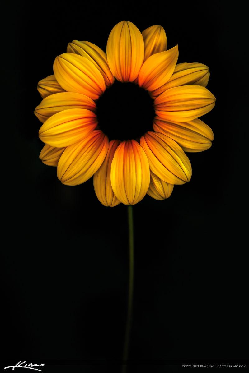 Sunflower Art on Black