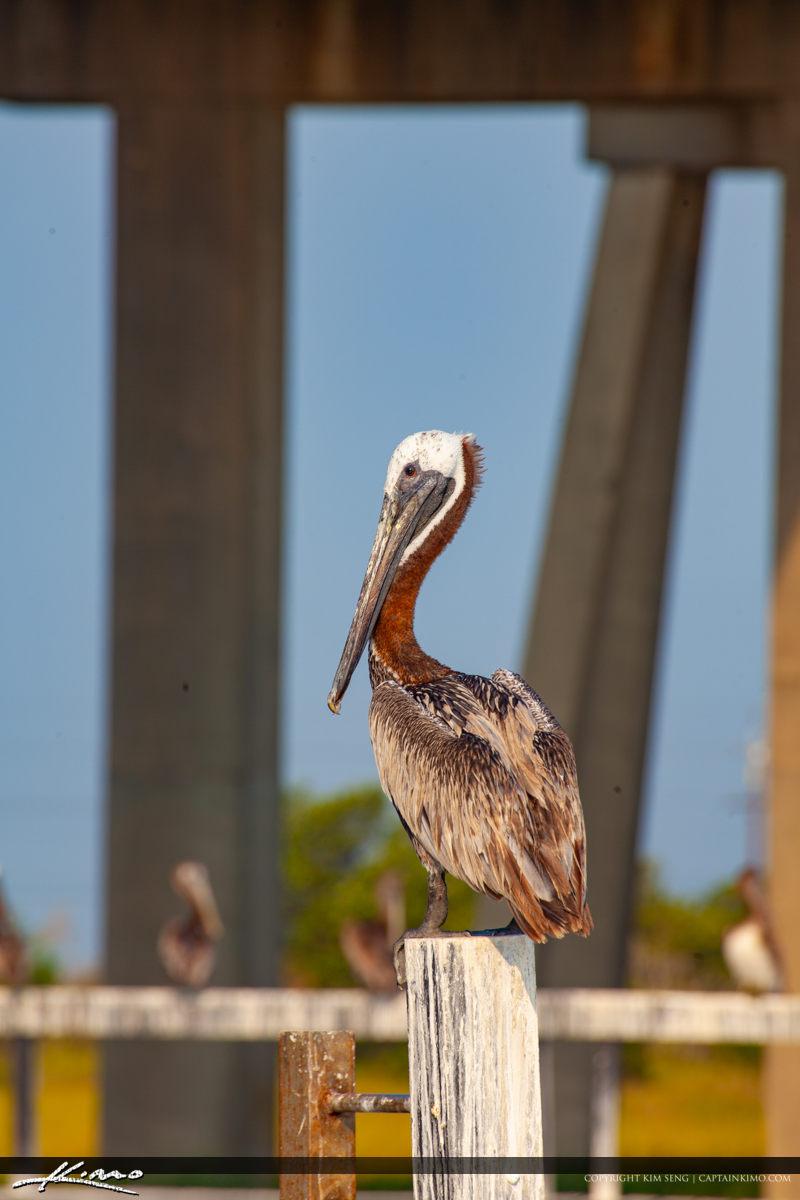 Tybee Island Swamp Wildlife Georgia