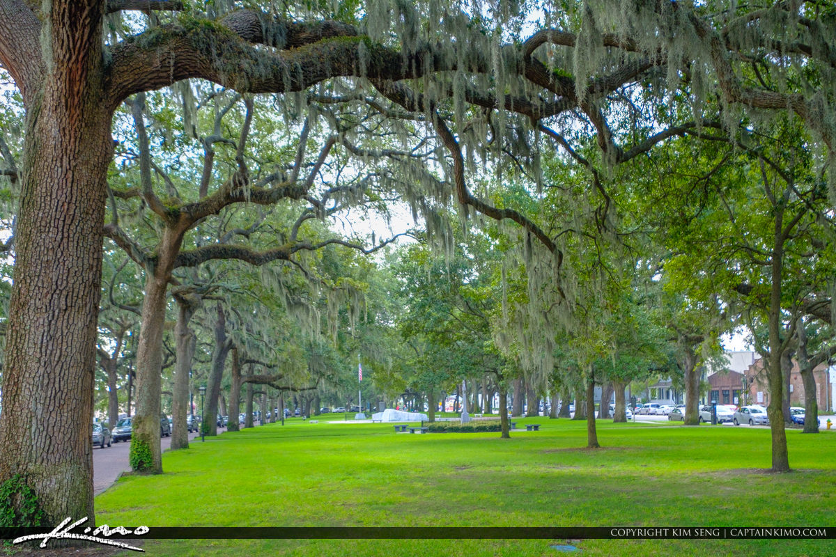 Oak Tree Spanish Moss Downtown Emmet Park Savannah Georgia