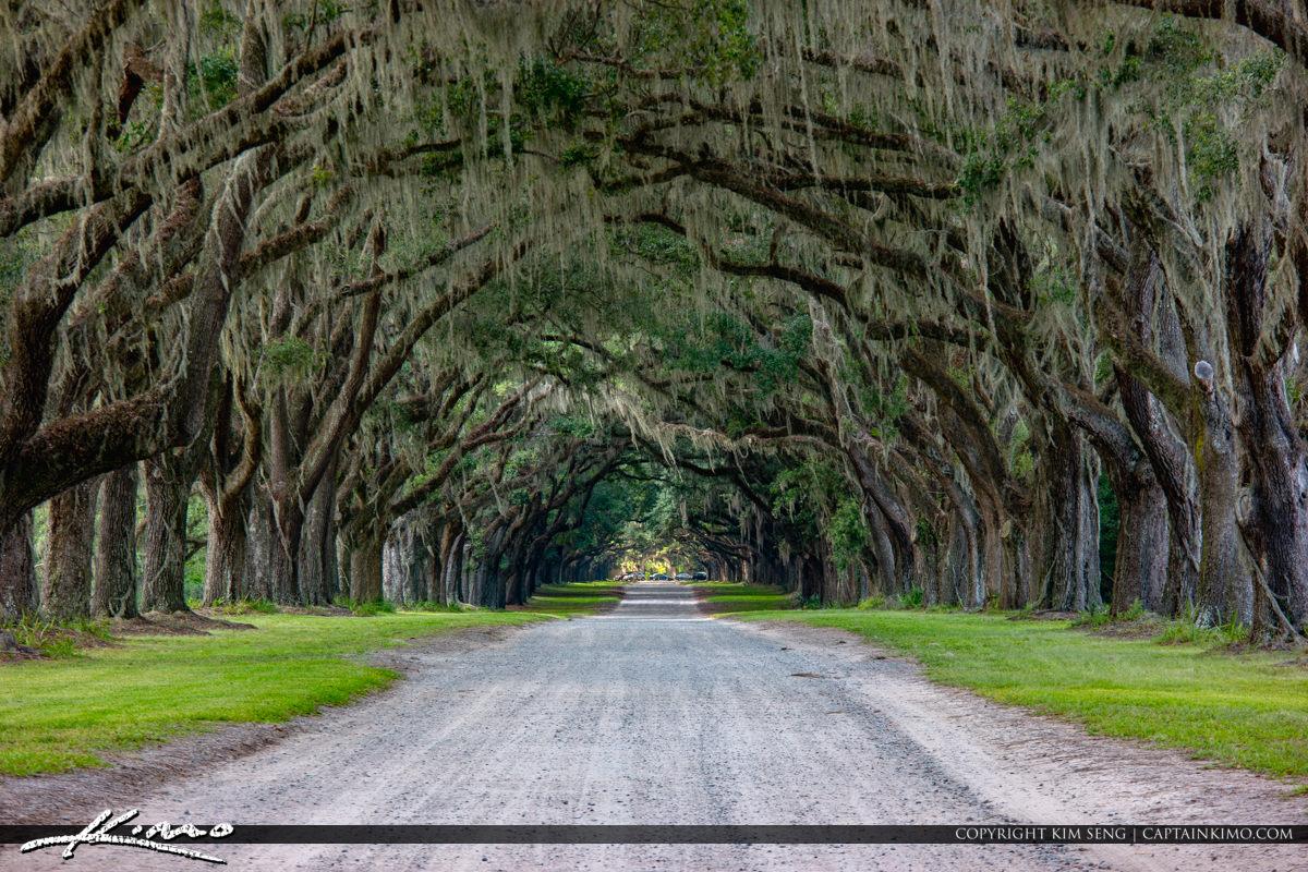 Wormsloe Historic Site Oak Tree Canopy Savannah Georgia