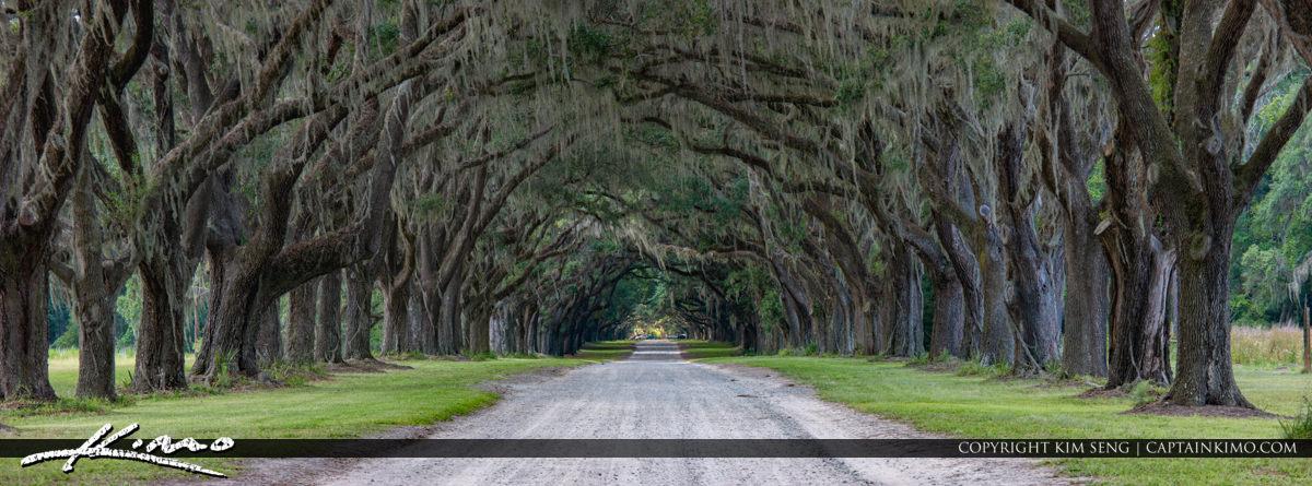 Wormsloe Historic Site Oak Tree Canopy Savannah Georgia Panorama
