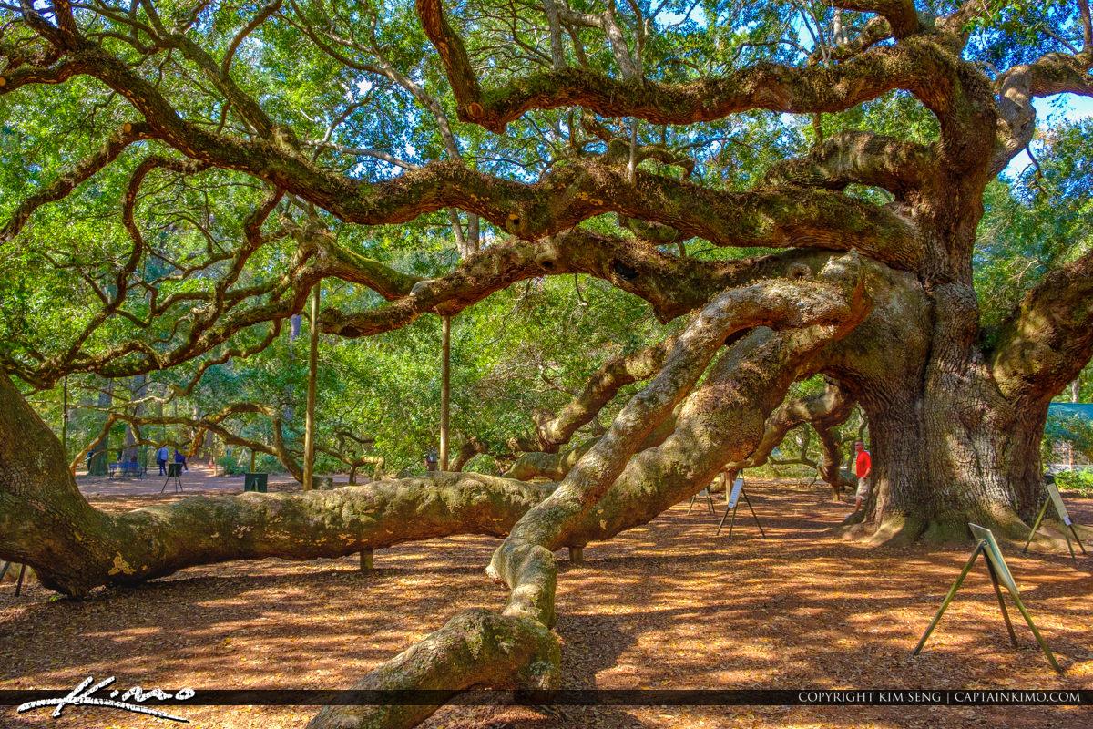 Angel Oak Tree Johns Island Charleston South Carolina