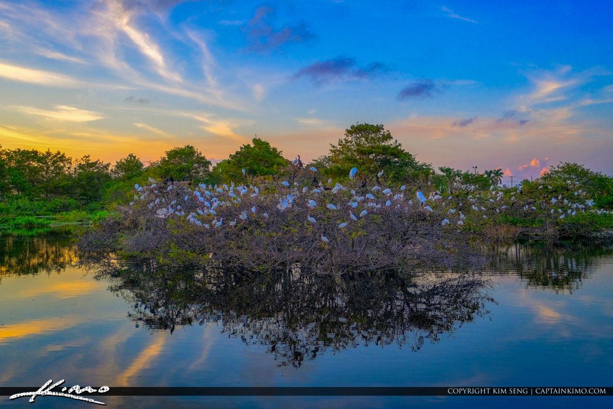 White Birds Roosting Sunset Wakodahatchee Wetlands Delray Beach